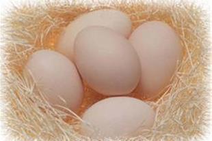 فروش تخم مرغ خوراکی بومی