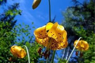 تولید گیاهان گلخانه ای و باغچه ای