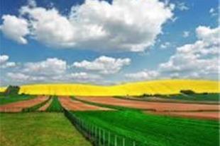 کشاورزی دامداری گلخانه فروش فوری