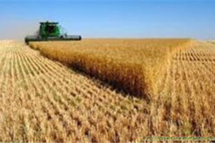 خرید فروش محصولات کشاورزی