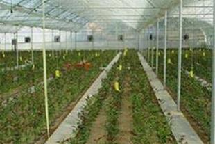 فروش یا معاوضه گلخانه واقع در شهرک گلخانه ای آوه