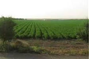 6 هکتار زمین کشاورزی نظراباد هشتگرد