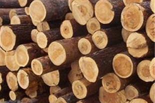 چوب فروشی عبدی
