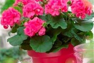 نگهداری از فضای سبز و گل و گیاه