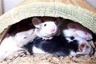 دفع دائمی موش و دفع دائمی حشرات تضمینی