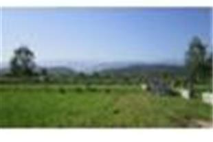 فروش زمینهای هکتاری سنددار در مازندران