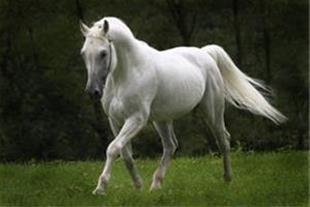 تور طبیعت گردی اسب سواری و آموزش سوارکاری