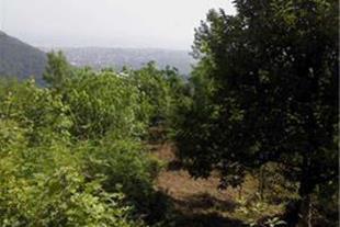 فروش زمین دررامسر اربه کله باچشم انداز زیبا