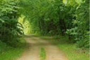 تور کلبه های جنگلی بام رامسر
