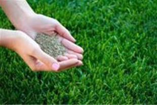 فروش بذر چمن ، فروش انواع بذر - 1