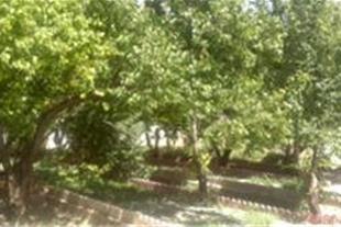 فروش باغ 6000 متری در شهریار کد 156
