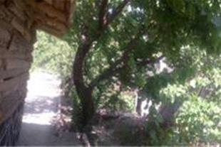 فروش باغ 1200 متر شهریار کد 175