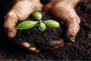 پرورش کرم خاکی ( ورمی کمپوست )