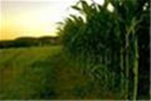 فروش فوق العاده زمین کشاورزی