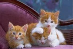 خرید وفروش انواع حیوانات خانگی ولوازم حیوانات خانگ
