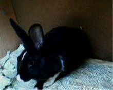 خرگوش - 1