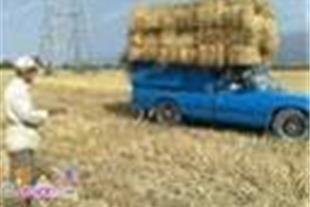 خرید و فروش انواع کاه گندم/جو/سبزه و علوفه دامی