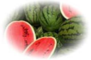 فروش هندوانه صادراتی