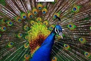 تخفیف باغ پرندگان در 20ta100.com