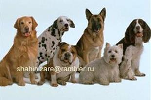 خرید و فروش انواع سگ