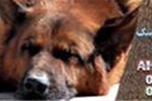 خرید ، فروش و آموزش انواع سگ های نگهبان و شکاری