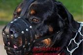 فروش سگ نگهبان روت وایلر