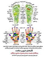 گیاهان دارویی سلامت