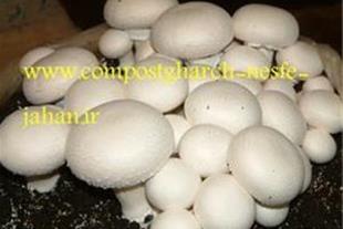 فروش کمپوست و خاک پوششی قارچ