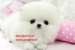 فروش لوازم جانبی حیوانات خانگی