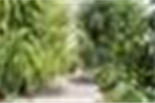 فروش باغ ویلا وزمین کشاورزی
