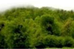 تور یکروزه جنگل الیمستان