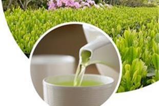 محصولات سنتی عطاری و گیاهان دارویی