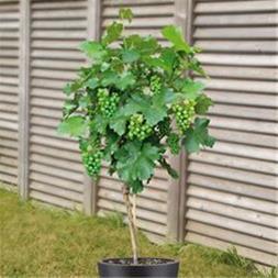 درخت چند نوع میوه،نهالستان ،نهال فروشی پارس - 1