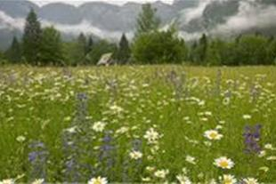 زمینی مناسب جهت باغ و ویلا