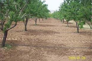 فروش 17 جریب باغ بادام و هلو منطقه سامان-قطره ای