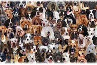 باشگاه اطلس دام پارسیان فروش سگ گارد و شکاری