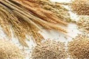 ترخیص غلات از گمرک امیرآباد