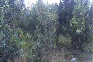 زمین جنگلی نزدیک به شهر