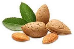 بازاریابی برای صادرات بادام