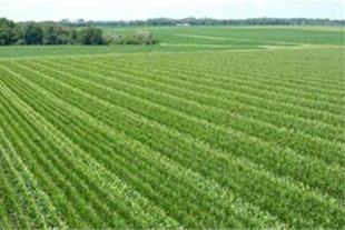 فروش زمین به مساحت 8هزار متر