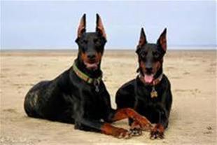 خرید و فروش انواع سگ های بی نظیر