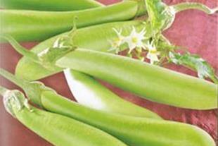 فروش بذر بادمجان سبز هلندی