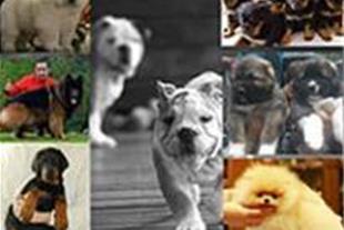 واردات بهترین نژاد سگ نگهبان ، نژاد گربه و پرندگان