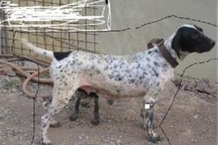 فروش سگ شکاری