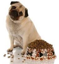 عرضه غذای خشک سگ