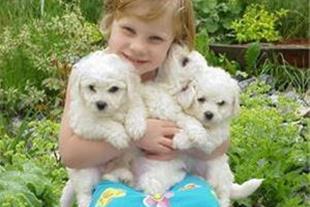 فروش انواع لوازم و غذای سگ و گربه