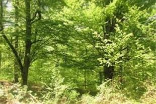 فروش زمین 186 هکتاری جنگلی در ساری