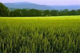 فروش زمین کشاورزی مرغوب در ساری