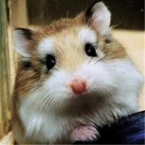 فروش همستر سنجاب خرگوش خوکچه بندرعباس - 1