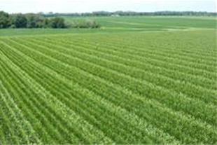 فروش زمین کشاورزی 120 هکتاری در شمال